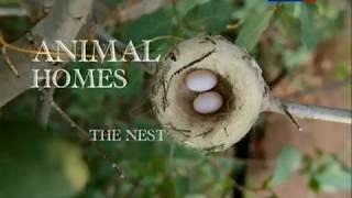 видео: Гнёзда. Архитекторы от природы.