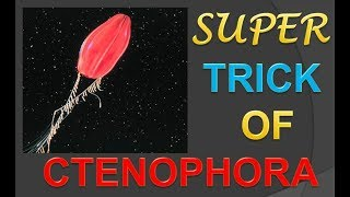 Phylum - Ctenophora. Trick to remember