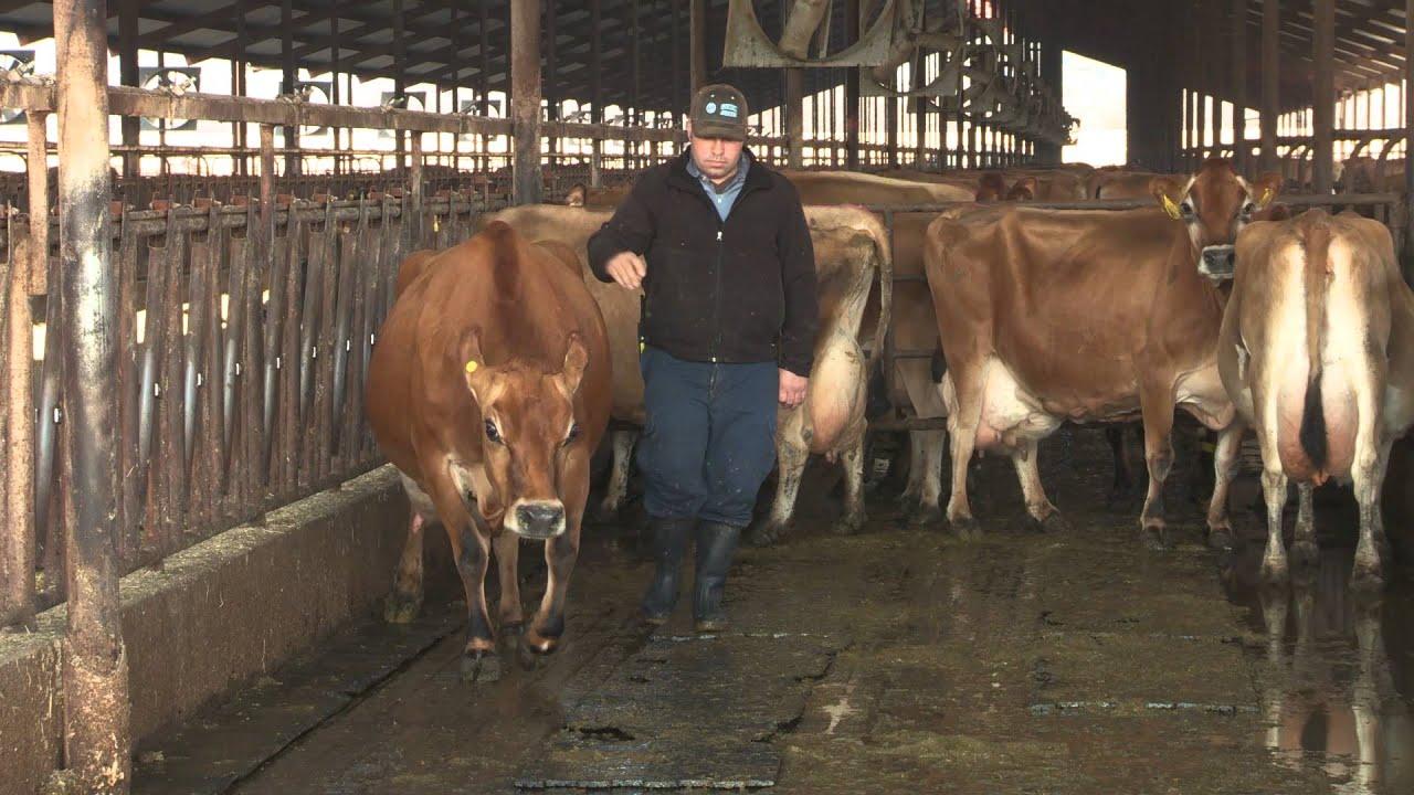 Holstein Forum