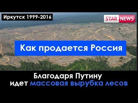 ИЗ-ЗА Путина идет массовая вырубка лесов! Иркутск Россия 2018