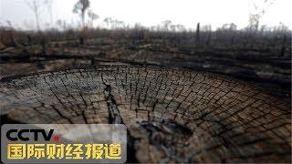 [国际财经报道]关注亚马孙雨林大火 七国集团已就救助亚马孙雨林大火初步达成一致| CCTV财经