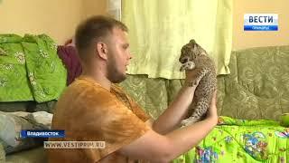 Собака из Приморья усыновила детеныша африканского леопарда
