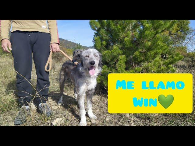 Win perro en adopción en la protectora de animales de Jaca