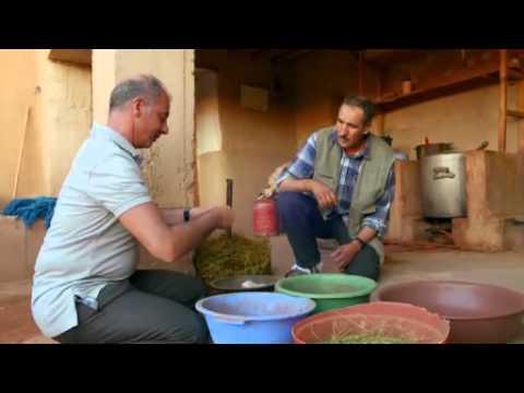 1001 Teppich: Echte Perser, falsche Perser - gute Geschäfte