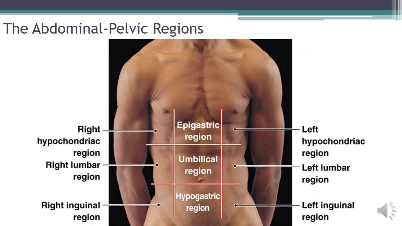 Language of Anatomy Video 4 The Abdominopelvic Regions and Quadrants ...