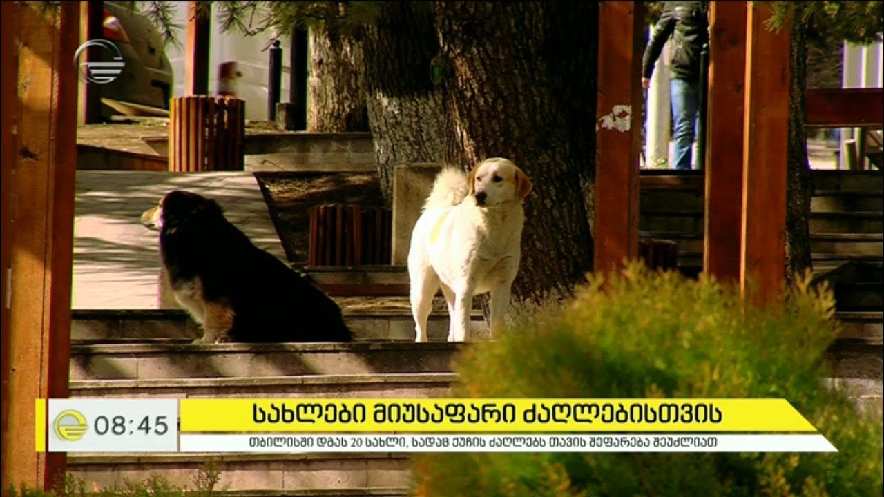ძაღლი, რომელმაც ადამიანი გადაარჩინა და სახლები მიუსაფარი ძაღლებისთვის