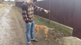 Ала ҟәыш – Умная собака