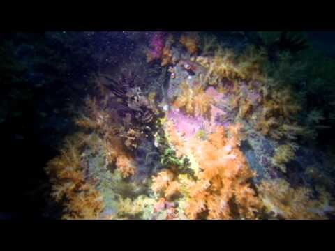 Diving Burma December -13