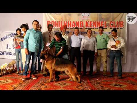 Best in Show Ring 1 | Bareilly Dog Show | 26th March 2017
