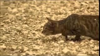 Как кот охотится  Прикольное видео