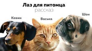 Аудио рассказ про животных.