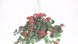 24 inch Red Geranium in Hanging Basket - artificialplantsandtrees.com