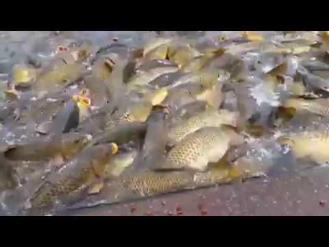Рыбалка в казахстане,