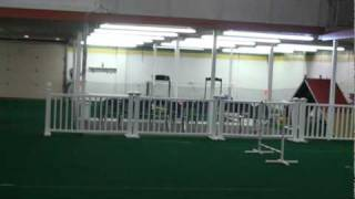 You Go Little Dog Training Facilities / Walking Tour