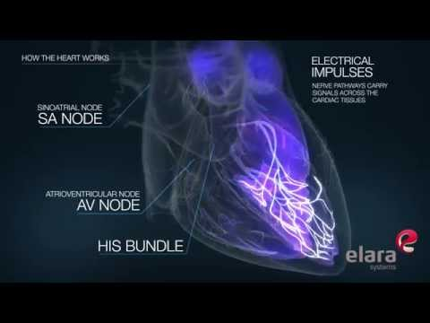 How The Heart Works- 3D Animation