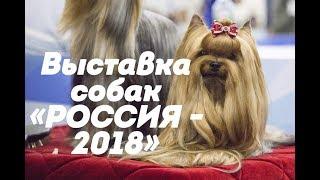 Интернациональная выставка собак «РОССИЯ - 2018»