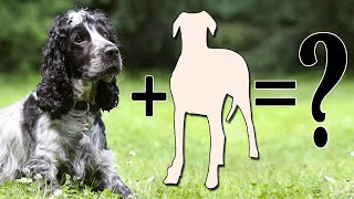 7 Popular Spaniel Mixes Dog Breeds | Cocker spaniel mix Breed Dog