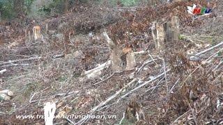Quỳ Châu: Người dân chặt phá rừng trái pháp luật