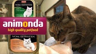 animondaを食べる猫たち