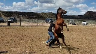 Скачать WILD HORSE RACE 2019 BLOOPERS PART 1