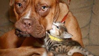 СМЕШНОЕ ВИДЕО - Смешные Кошки - Смешные Собаки - Собаки и щенки - Забавные животные - Забавные кошки