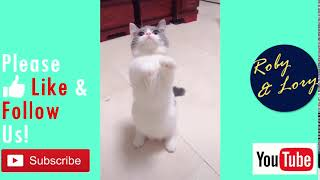 Cute Kitten Looking For Its Food Most Funny Cat Video