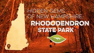 Hidden Gems of New Hampshire: Rhododendron State Park