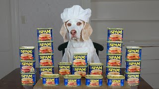 Dog Cooks with Spam: Funny Chef Dog Maymo