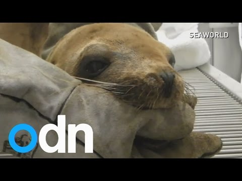 Animals rescued from California oil spill