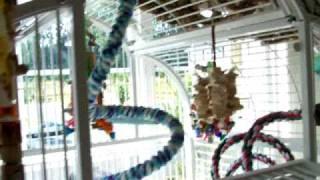 Great Bird Playground: Get-a-grip Net