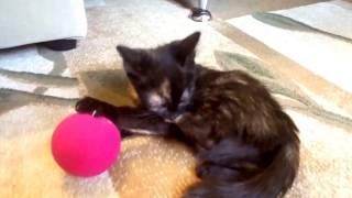 Котёнок Сима и розовый мячик