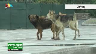 Объектив 29 03 19 В Николаеве собака покусавшая людей оказалась бешенной