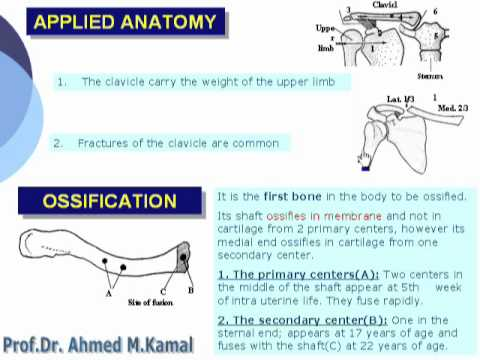Applied Anatomy Ossification Of Clavicle Youtube