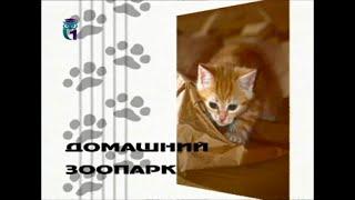Домашний зоопарк. Щенки среднеазиатской овчарки. Болезни стареющих животных. Котята