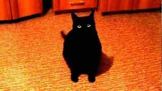 Кот повторюшка