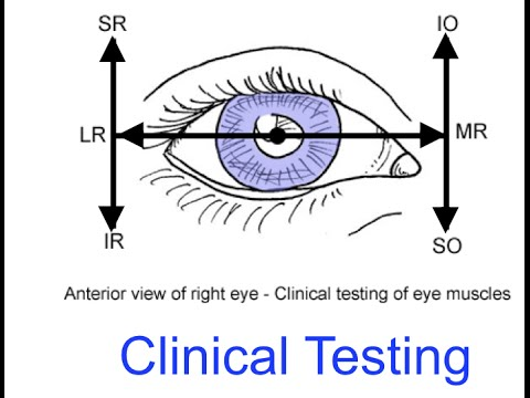Clinical testing extraocular muscles tutorial - YouTube