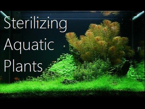 Sterilizing Aquatic Plants - Wes