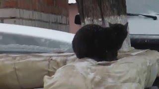Черный кот и конопатая цветная кошка с Гагарина. Белгород. Зима.