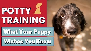 Puppy Potty Training Tips That Can Help You Understand Your Dog Better