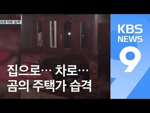 """""""야생 곰·사자에 당했다""""…주택가 내려와 습격 '공포' / KBS뉴스(News)"""
