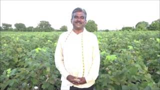 Ganesh Nanote on Bt Cotton farming in India