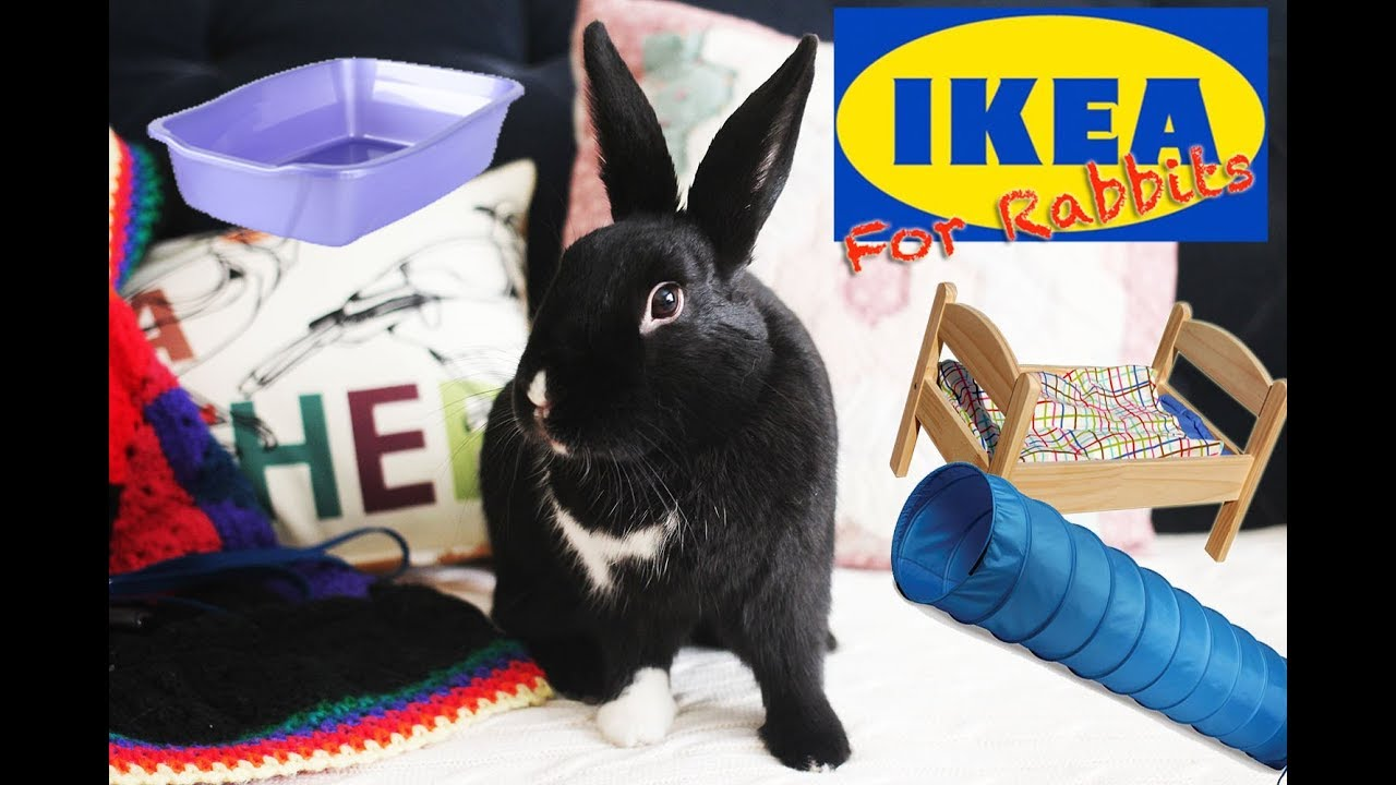 Things You Can Buy At Ikea For Rabbits Youtube
