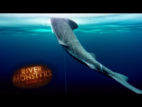 Catching A Mysterious Arctic Shark | SHARK | River Monsters