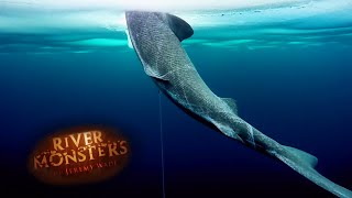 Mysterious Arctic Shark - River Monsters
