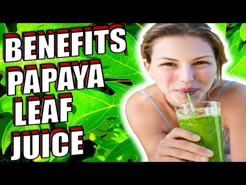 13-incredible-health-benefits-of-papaya-leaf-juice-you-must-know