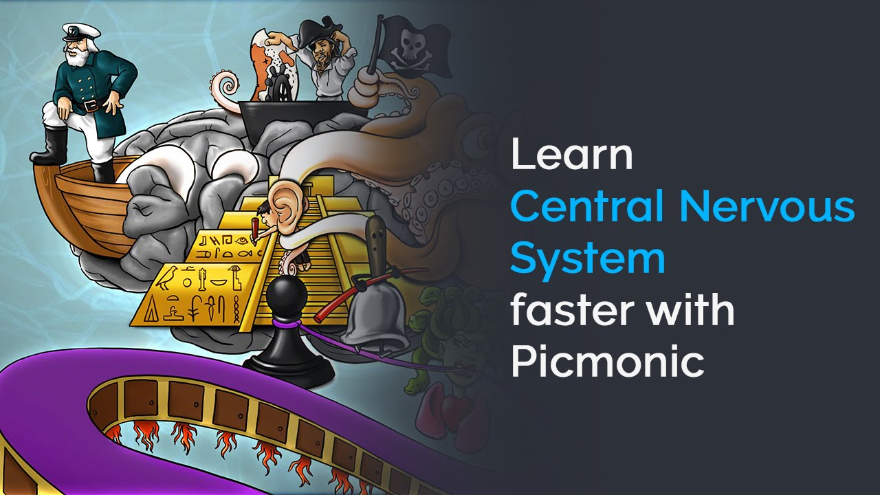 Learn Central Nervous System Faster with Picmonic (Anatomy ...
