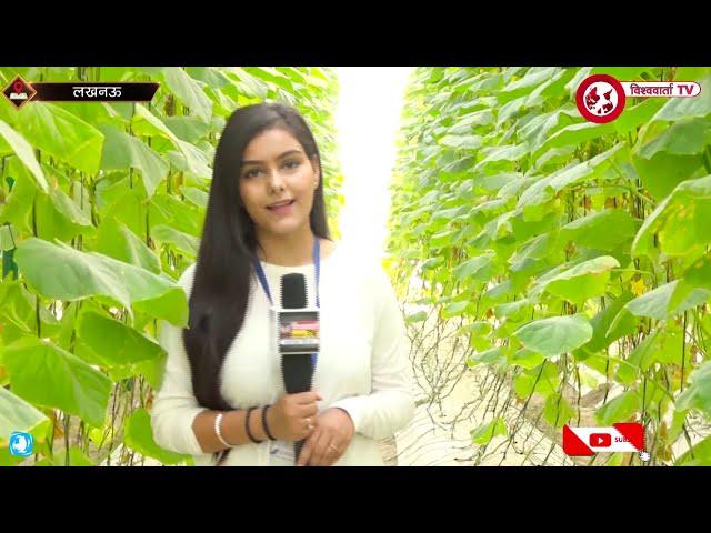 Lucknow | यहां हर मौसम में खास तकनीक से उगाए जाते हैं खीरे और गोभी