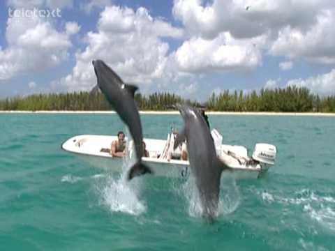 Bahamas - travel guide - Teletext Holidays