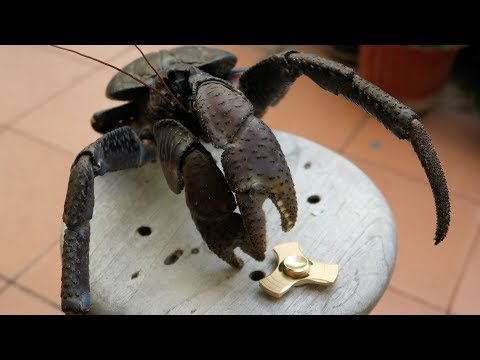 ULTIMATE TEST: FIDGET SPINNER VS COCONUT CRAB