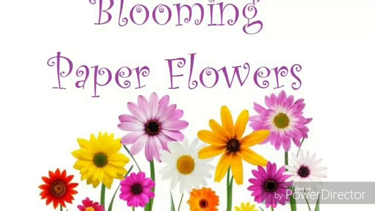 Blooming Paper Flowers Youtube